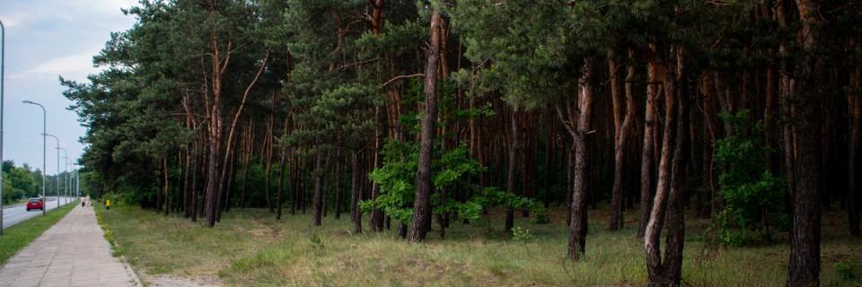 Las Matki Mojej